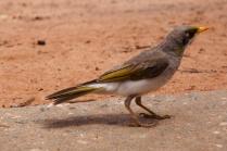 Leuke vogeltjes