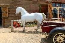 Nog een paard
